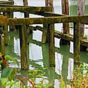 Seagull Nesting Dock Art Print