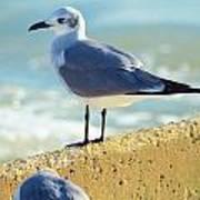 Seagull On Sea Wall Art Print