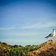 Seagull On The Rock Print by Raimond Klavins