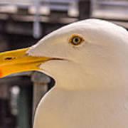 Seagull Profile Art Print