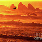 Seagull Soaring Over The Surf At Sunset Oregon Coast Art Print