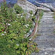 Seagull Steps Guard Island Alaska Art Print