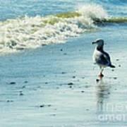 Seagull Stroll Art Print