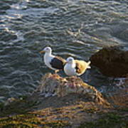 Seagulls Aka Pismo Poopers Art Print