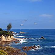 Seagulls At Laguna Beach Art Print