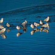 Seagulls On Frozen Lake Art Print