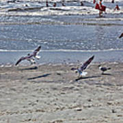 Seagulls On The Beach Art Print