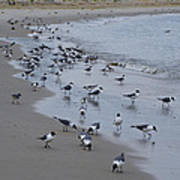 Seagulls On The Delaware Bay Art Print by Bill Cannon