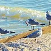 Seagulls On Wall Art Print