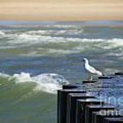Seagull's Perch Art Print