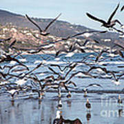 Seagulls Seagulls And More Seagulls Art Print