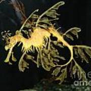 Seahorse Shuffle Art Print
