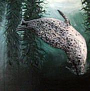 Seal In The Kelp Art Print