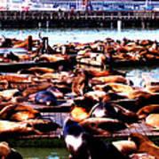 Seal Wharf Art Print