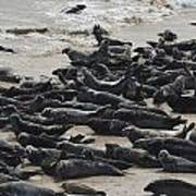 Seals On The Blasket Island Art Print