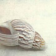 Seashell 6800 Art Print