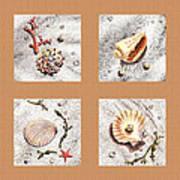 Seashell Collection II Art Print