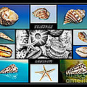 Seashell Collection Print by Kaye Menner