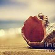 Seashell In The Sand  Art Print by Jelena Jovanovic