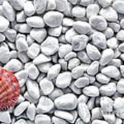 Seashell On White Pebbles Art Print