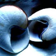 Seashell Rest Art Print