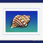 Seashell Wall Art 1 - Blue Frame Art Print