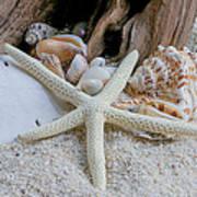 Seashells And Driftwood 2 Art Print