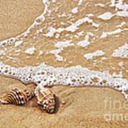 Seashells And Lace Art Print