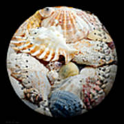 Seashells Baseball Square Art Print