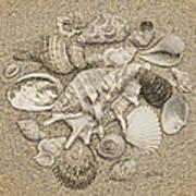 Seashells Collection Drawing Art Print