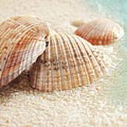 Seashells In The Wet Sand Art Print
