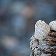 Seashells On Driftwood  Art Print