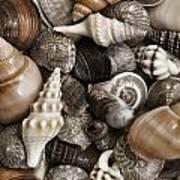 Seashells On The Beach Art Print