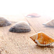 Seashells On Wood Dock Art Print