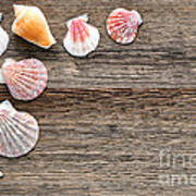 Seashells On Wood Art Print