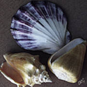 Seashells Spectacular No 30 Art Print
