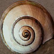 Seashells Spectacular No 34 Art Print