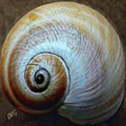 Seashells Spectacular No 36 Art Print