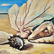 Seashore Shell Still Life Art Print