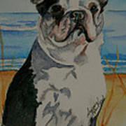 Seaside Harold Art Print