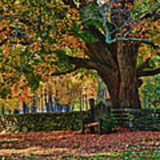 Seated Under The Fall Colors Art Print