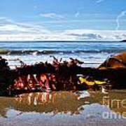 Seaweed 1 Art Print