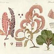 Seaweed Different Kinds Art Print