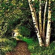 Sechelt Marsh Path Art Print
