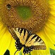 Secret Lives Of Sunflowers Art Print