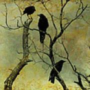 Secretive Crows Art Print