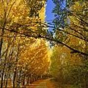 Autumn Secrets Art Print