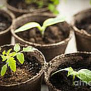 Seedlings  Art Print by Elena Elisseeva
