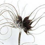 Seeds Art Print by Anne Gilbert