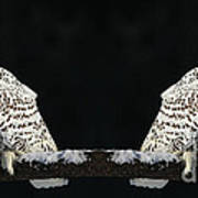 Seeing Double- Snowy Owl At Twilight Art Print